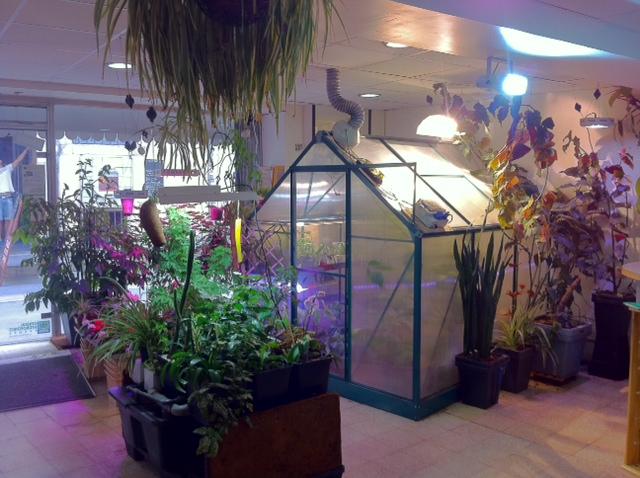L 39 or vert growshop nimes dpt 30 growshop nimes - Culture indoor nimes ...