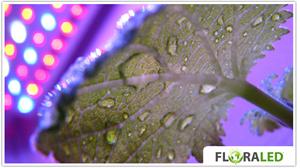 l 39 or vert led floraled led floraled clona panel 225. Black Bedroom Furniture Sets. Home Design Ideas